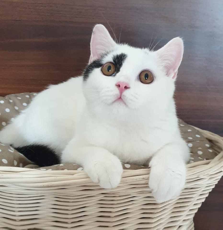 Mamy kocięta – Miot H