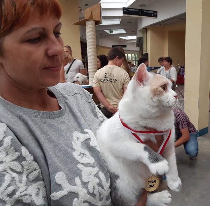 Międzynarodowa Wystawa Kotów Rasowych Wrocław.