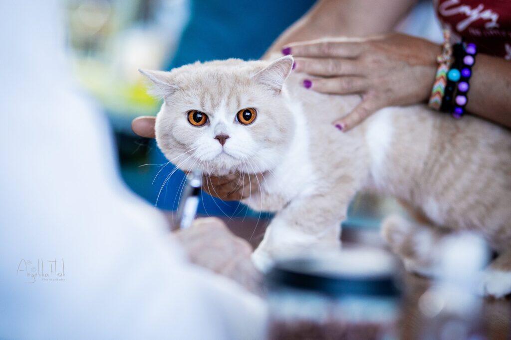 Międzynarodowa Wystawa Kotów Rasowych Tczew.