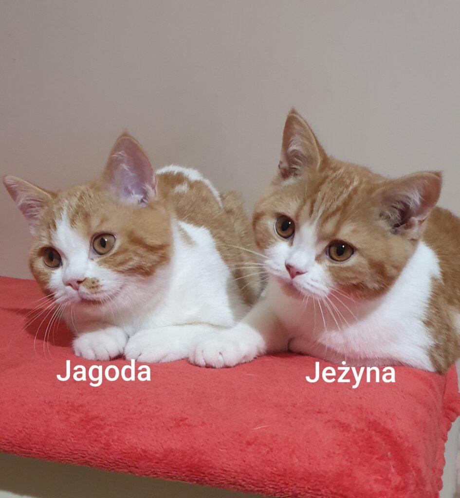JEŻYNA & JAGODA z Miotu J.