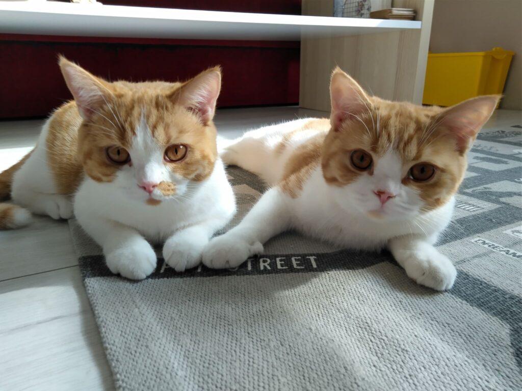 Jeżyna & Jagoda